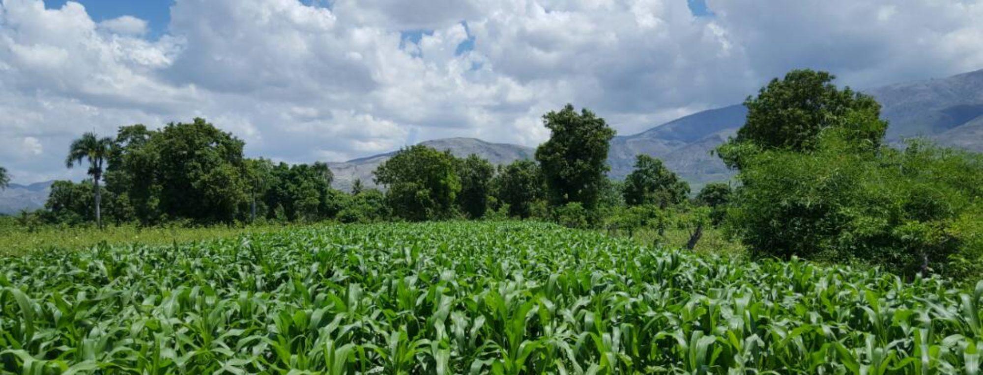 Planting Life Haiti