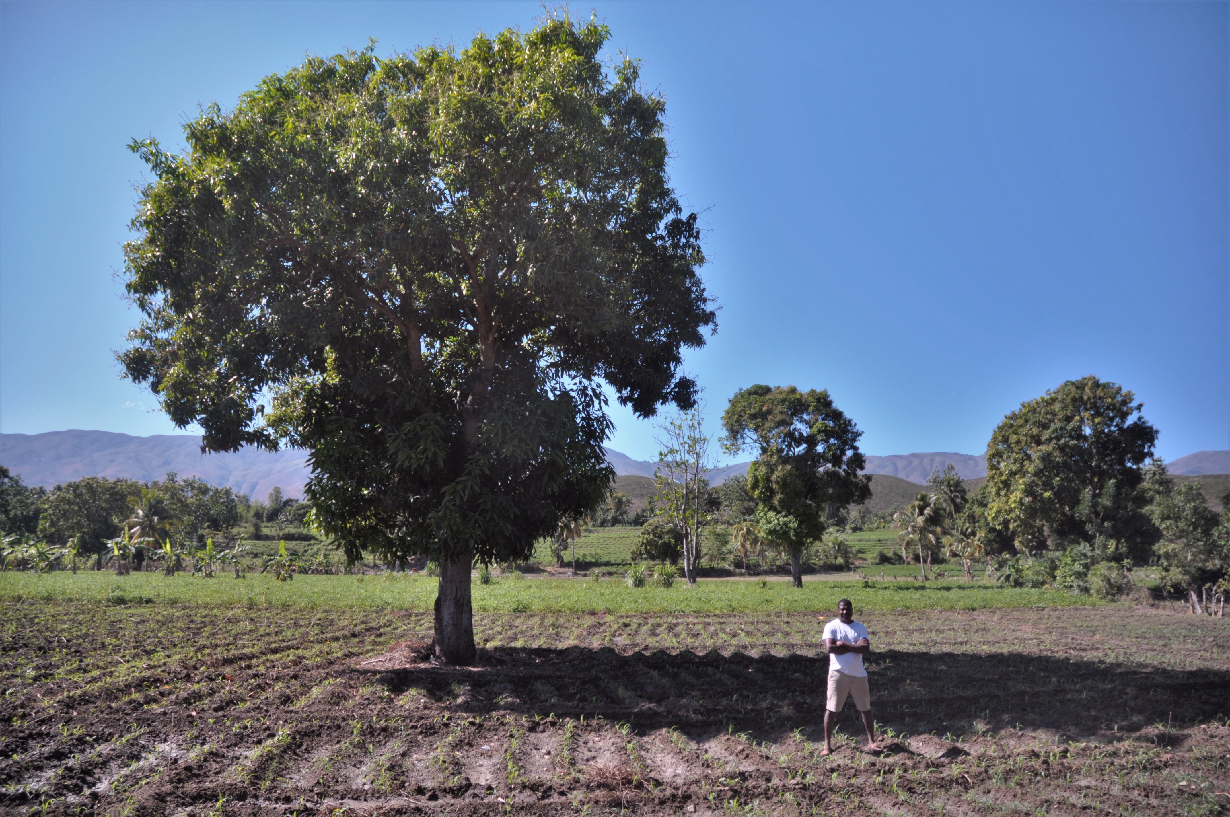 Haiti Farming Success