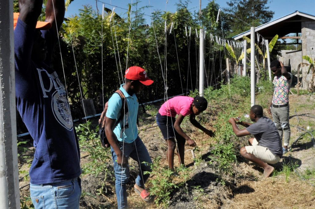 Haitian Agriculture Students tending crops