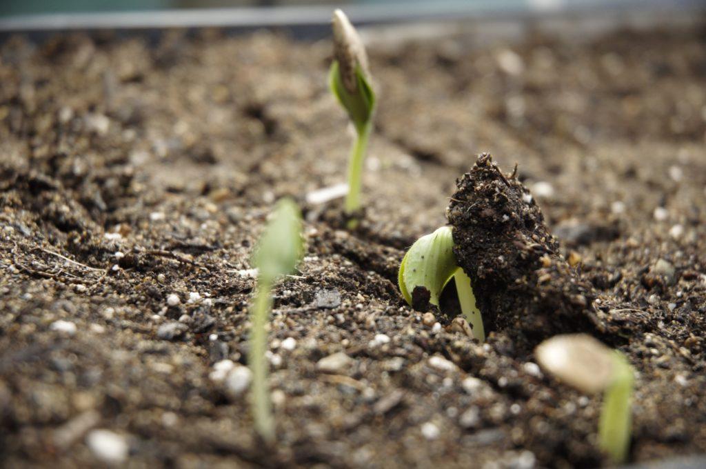 Planting Life Haiti Non-Profit Christian Foundation
