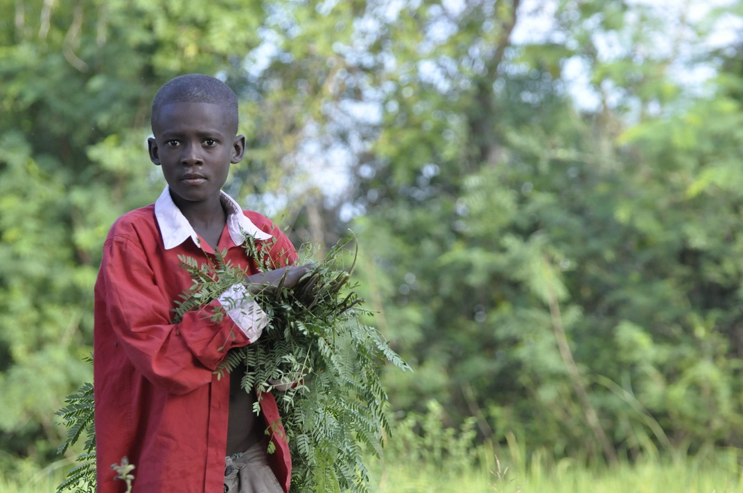 Haiti boy carries animal feed thru field