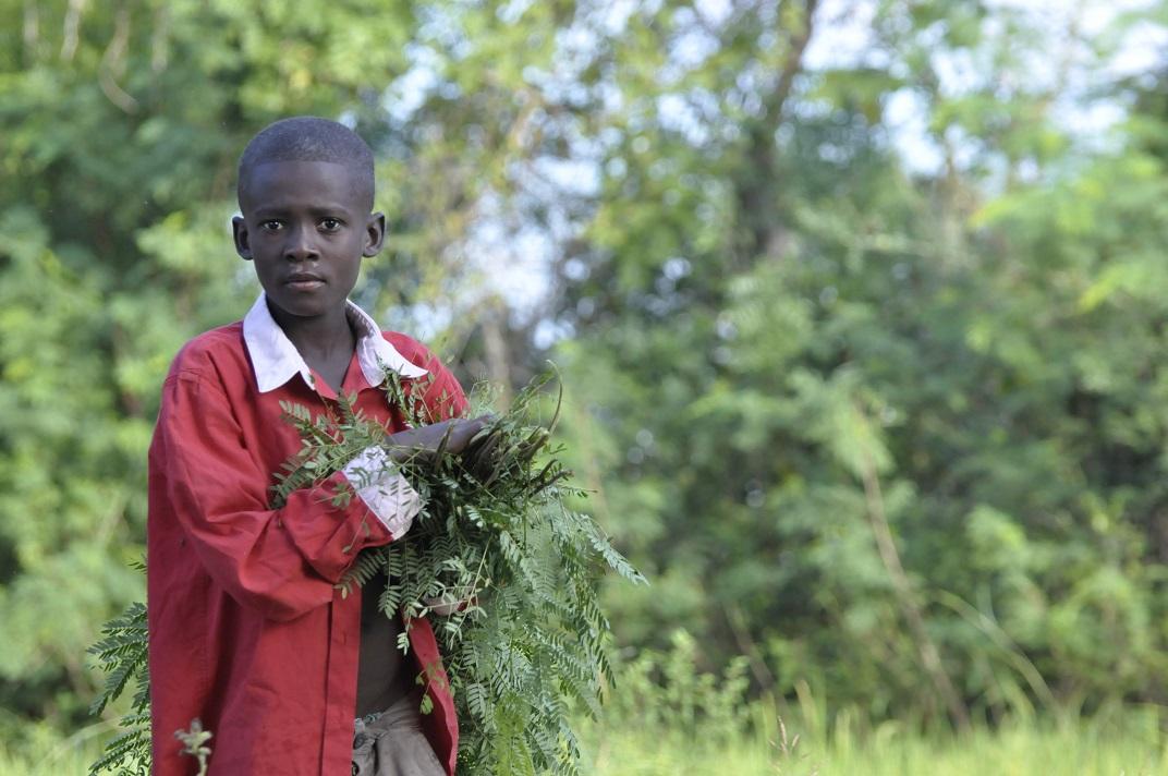 Haiti boy carries animal feed thru field