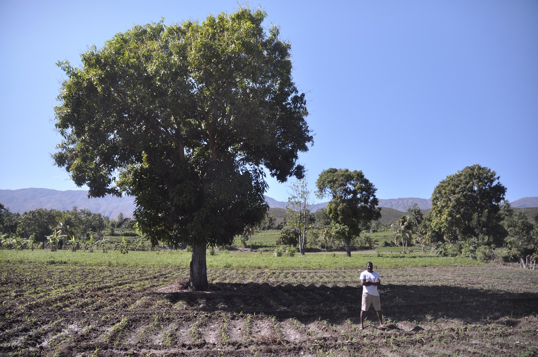 Haitian farmer poses in field after day spent planting corn