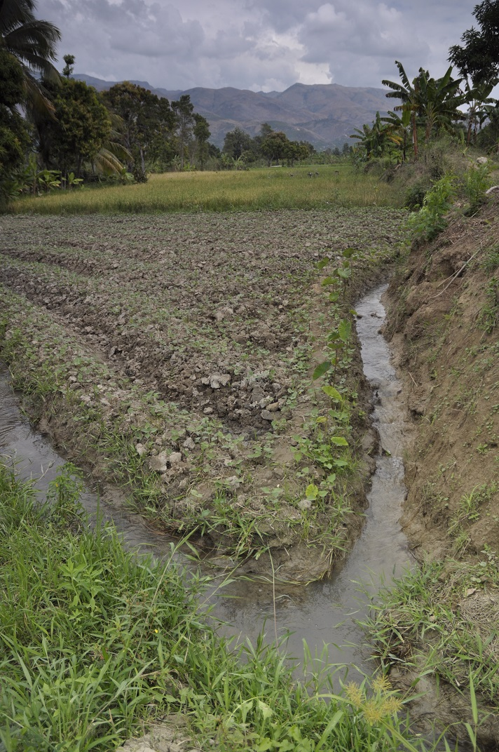 Haiti farm fields showing watering canals