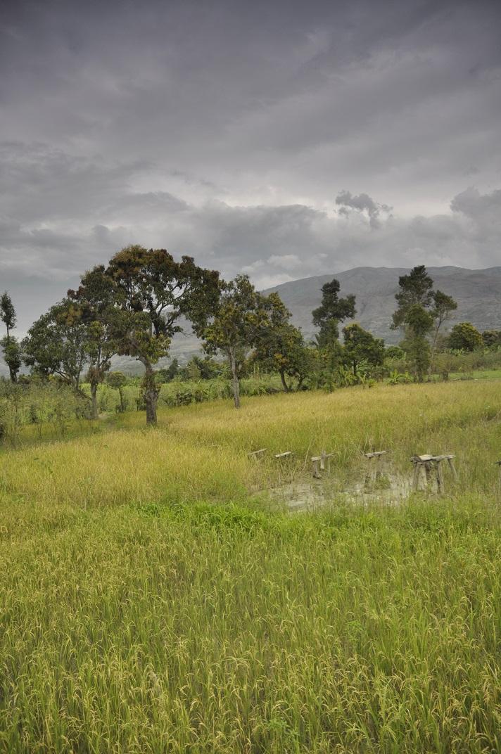 Haiti countryside Artibonite district