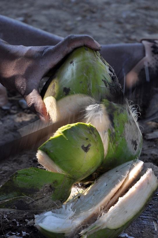 Haiti machete cuts coconut in two