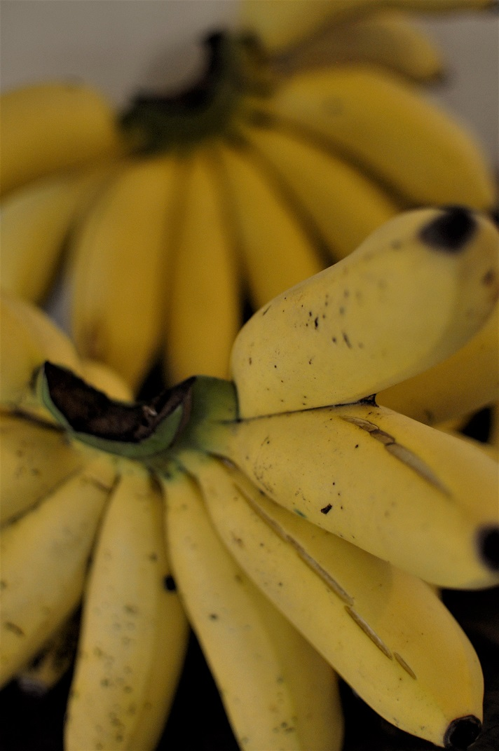 Yellow bananas in Haiti